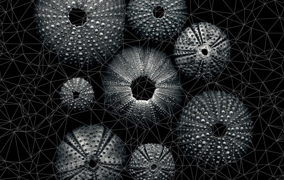 go_sea-urchin_tiepin_concept
