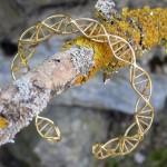 go_dna_bracelet_02